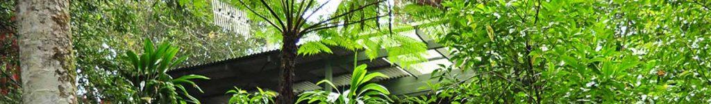 Crystal Creek Rainforest Retreat canopy